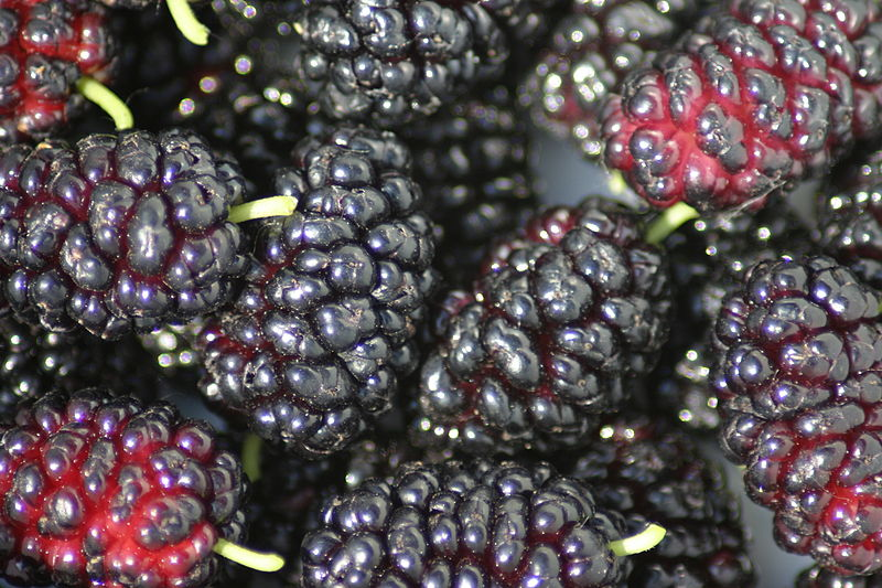 MULBERRIES - WhitePakistanWellingtonIllinois EverbearingNoir de Spain