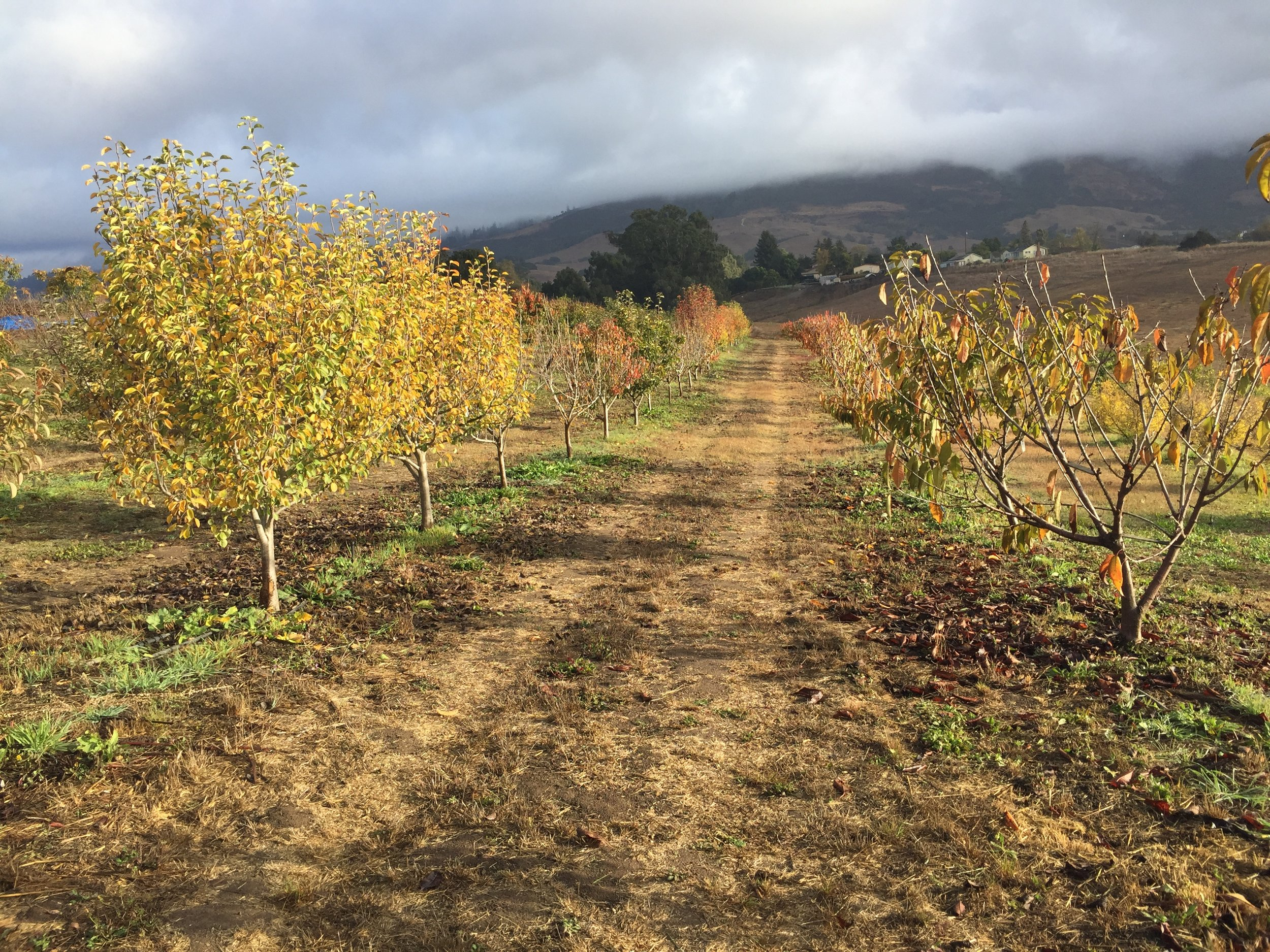 Fall in the Orchard