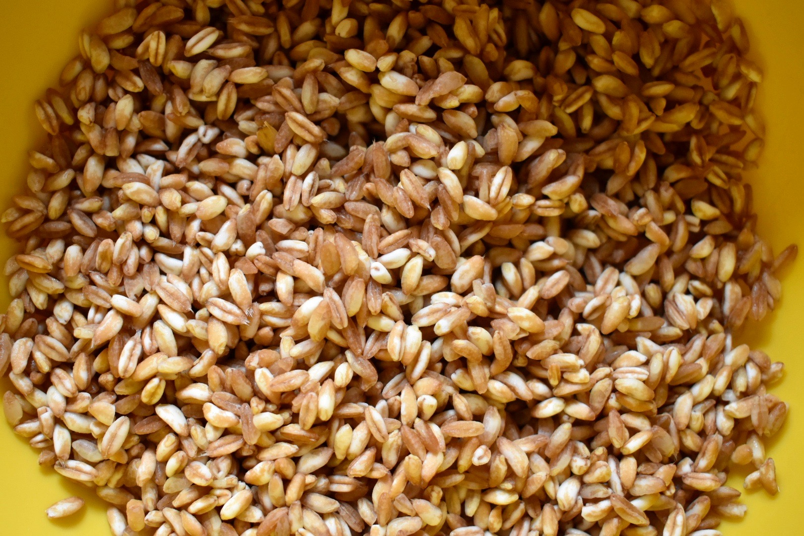 Farro is such a pretty grain.