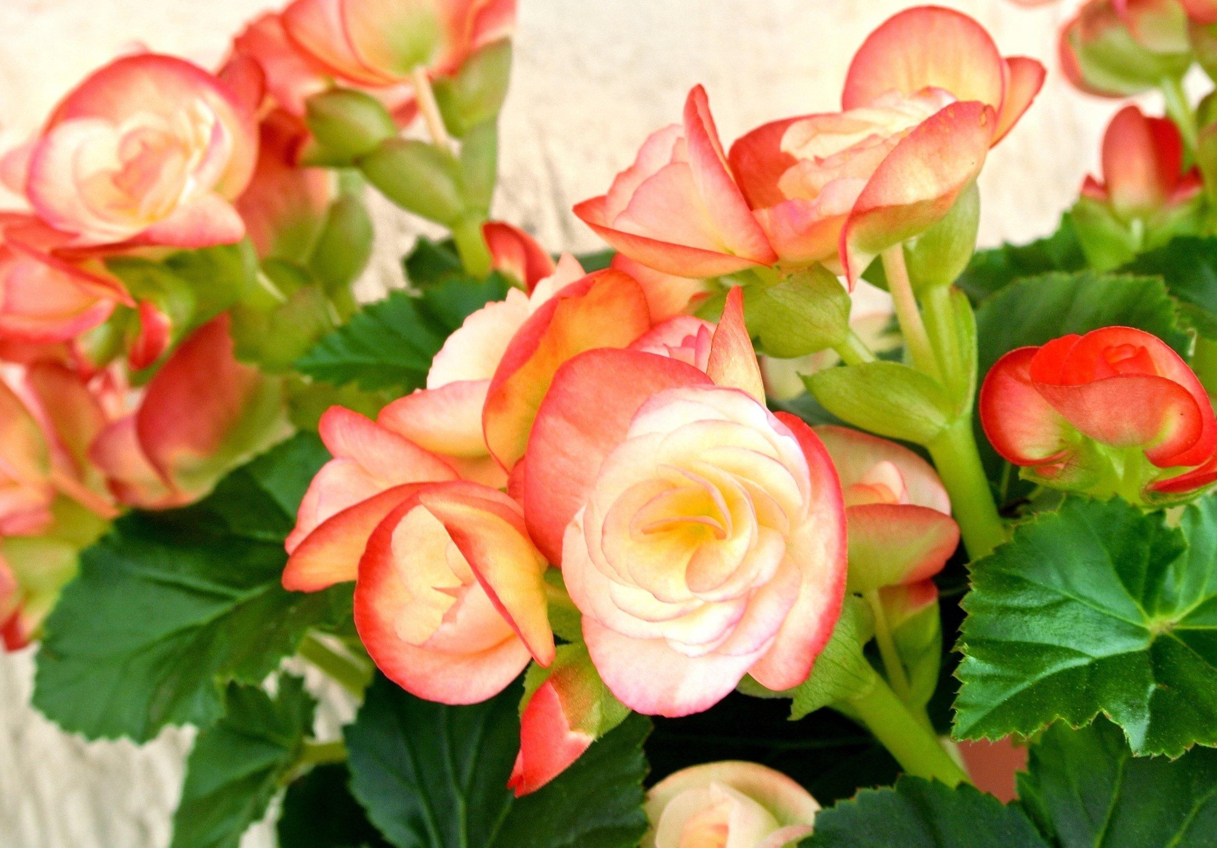 Bloom & Grow.jpg