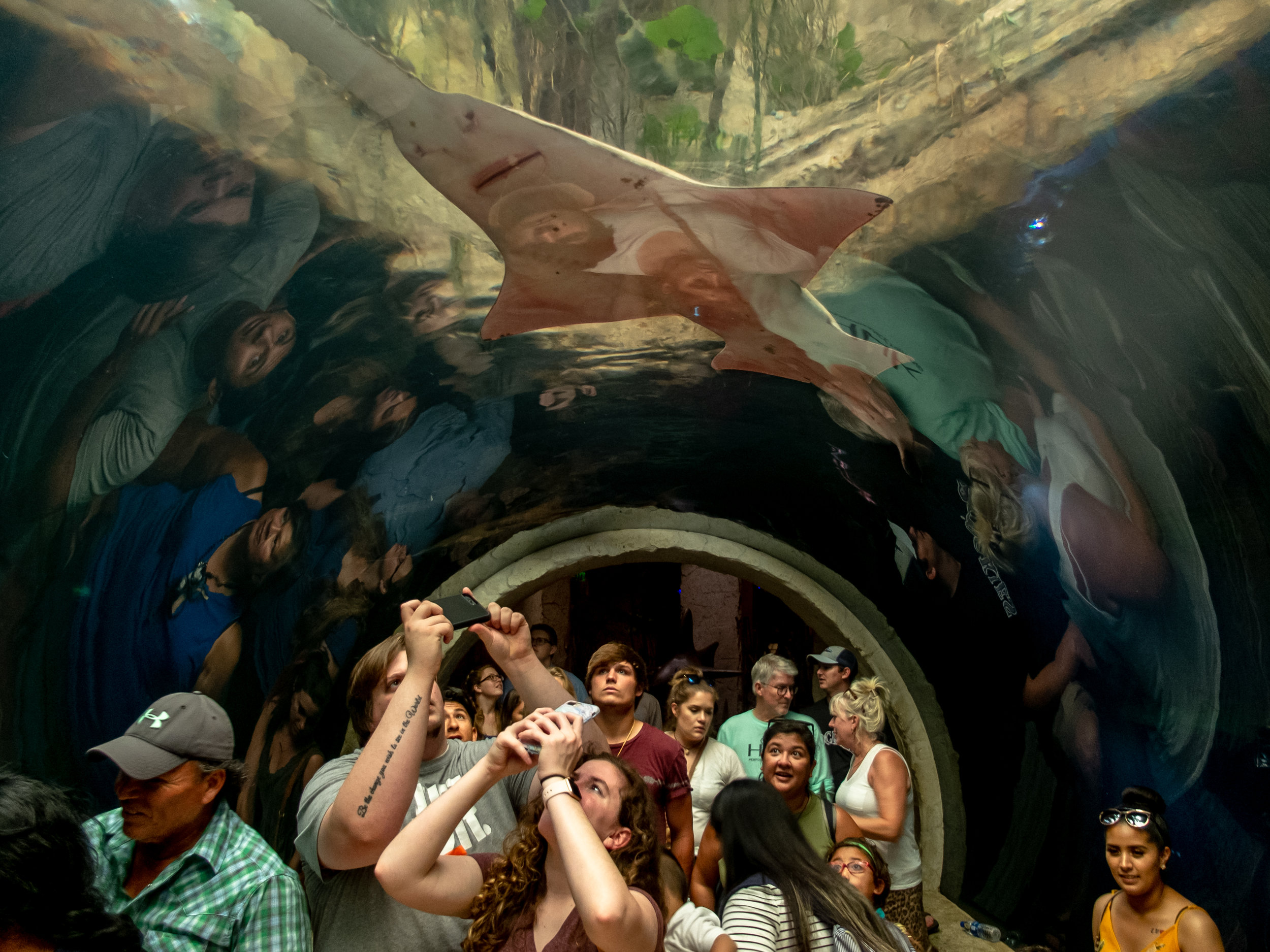 JULY 27, 2019 | VISITORS AT THE DALLAS AQUARIUM, LOOK ABOVE TO PHOTOGRAPH AND SEE A PRISTIOPHORIDAE, ALSO KNOWN AS A SAW-SHARK.