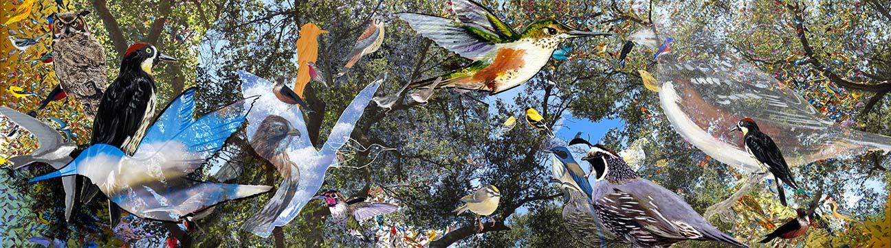 6-santa-monica-mountain-birds.jpg
