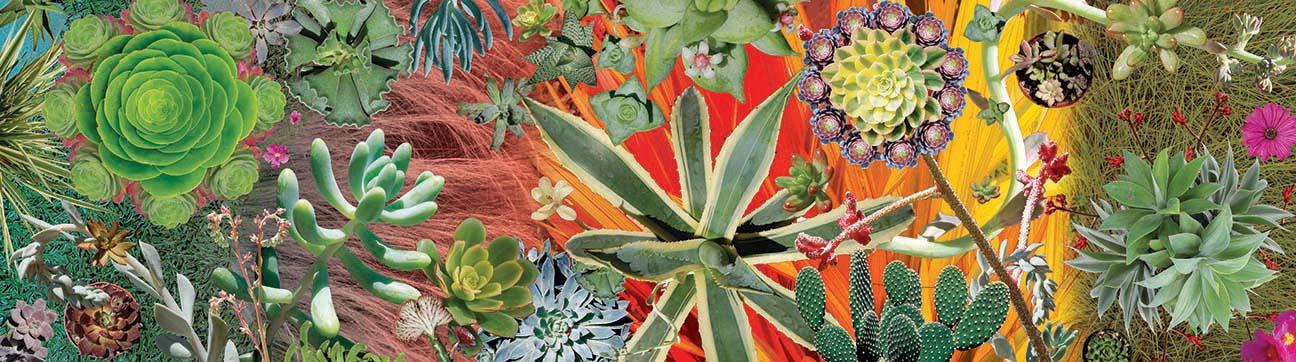 12-Succulents.jpg