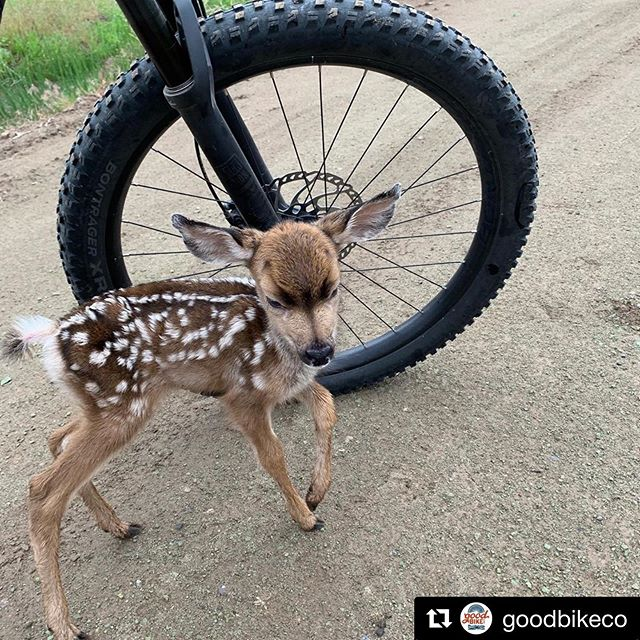 JRA! Just Riding Along and the 1-2 day old Fawn came up to me to say hi. The things you see and experience in Prineville are priceless. #goodbikeco #Repost @goodbikeco with @get_repost - #orsingletrack #mtb #bike #oregon #pnw #publicland #trail #singletrack #mountainbike #forest #mountains #advocacy #trailsmatter #recreation