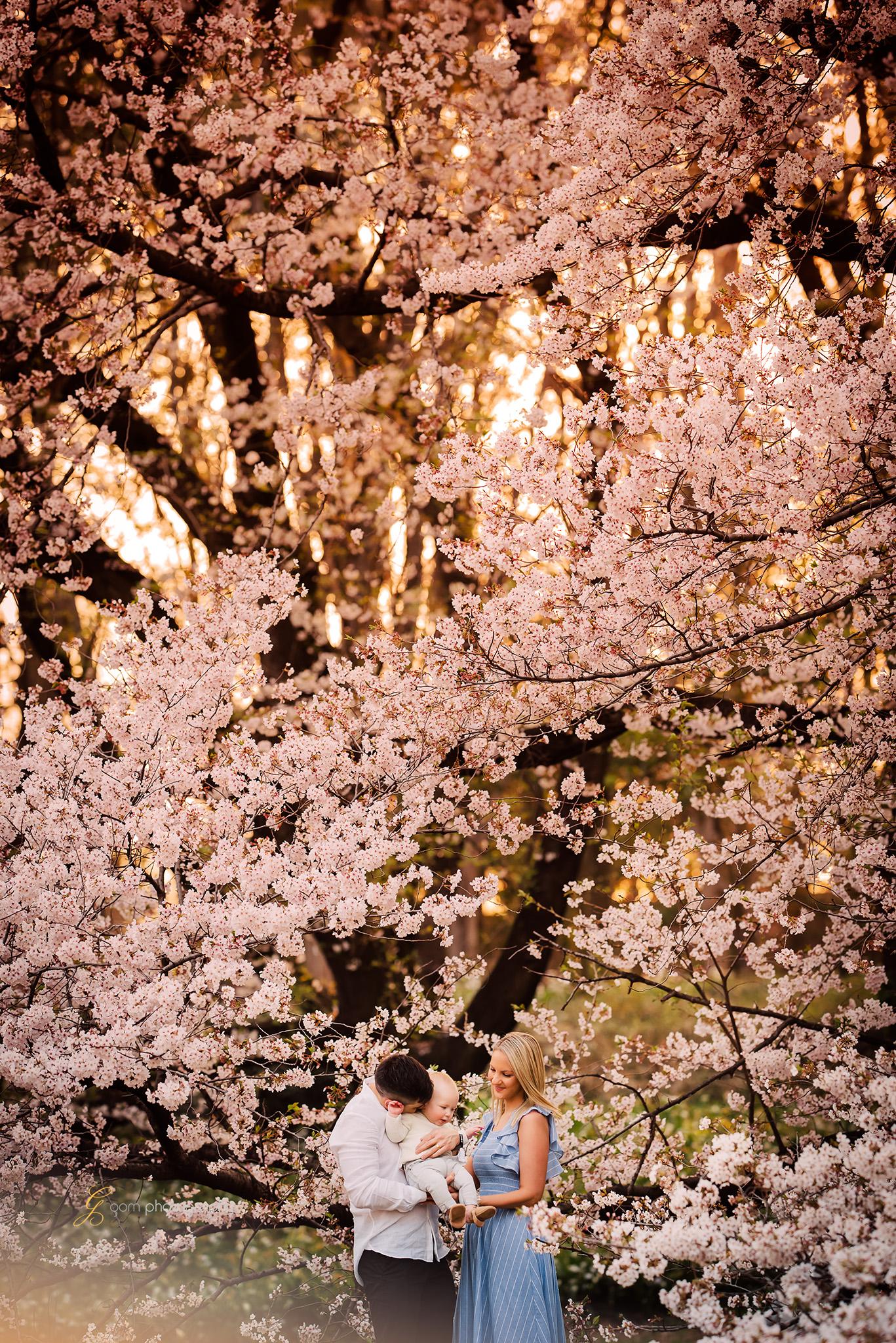 tokyo_photographer_cherry_blossom3