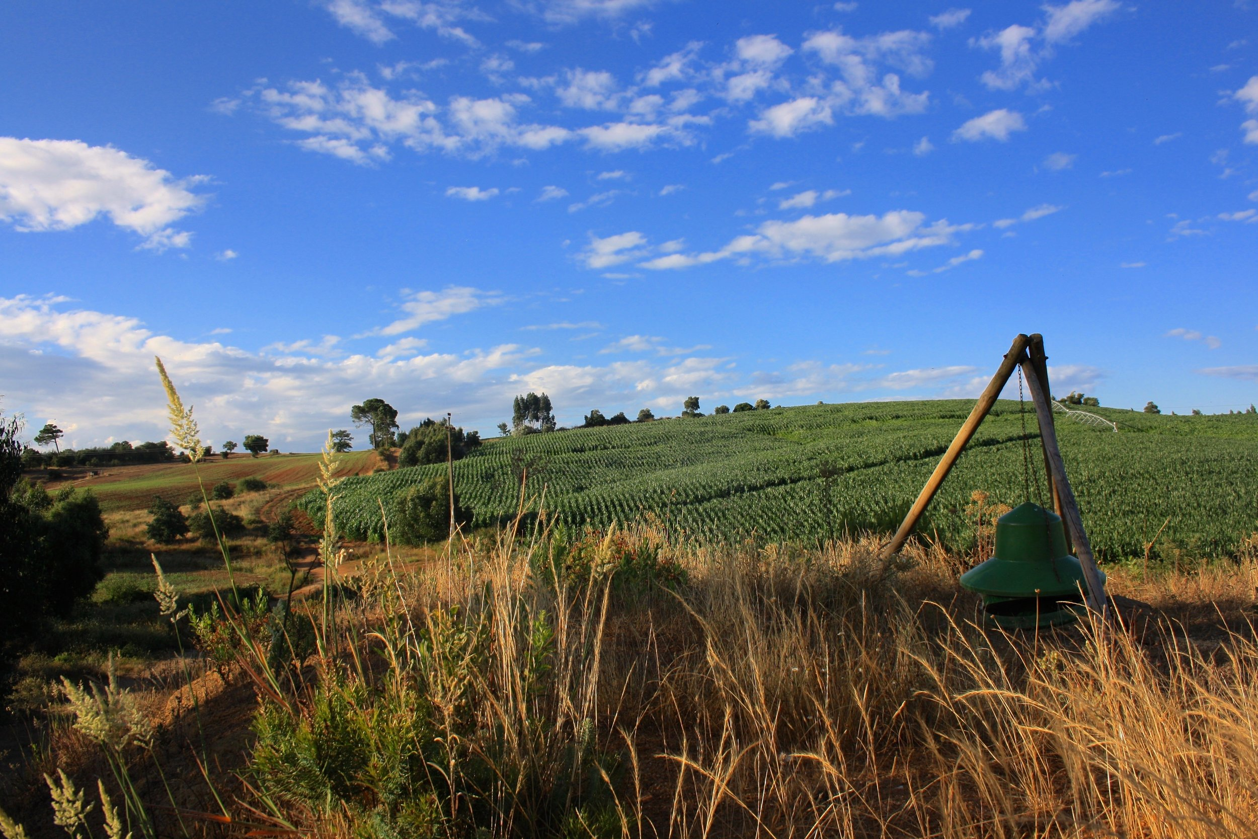 SOBRE NÓS-foto agricultura.jpg