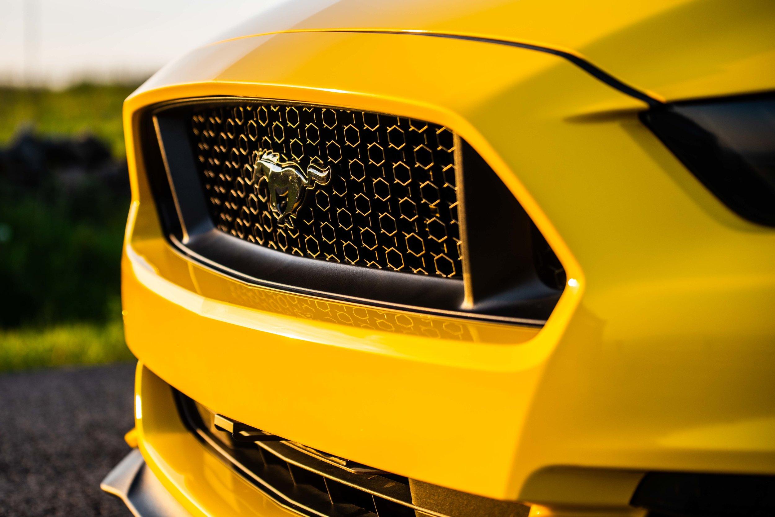 Mustang-12.jpg