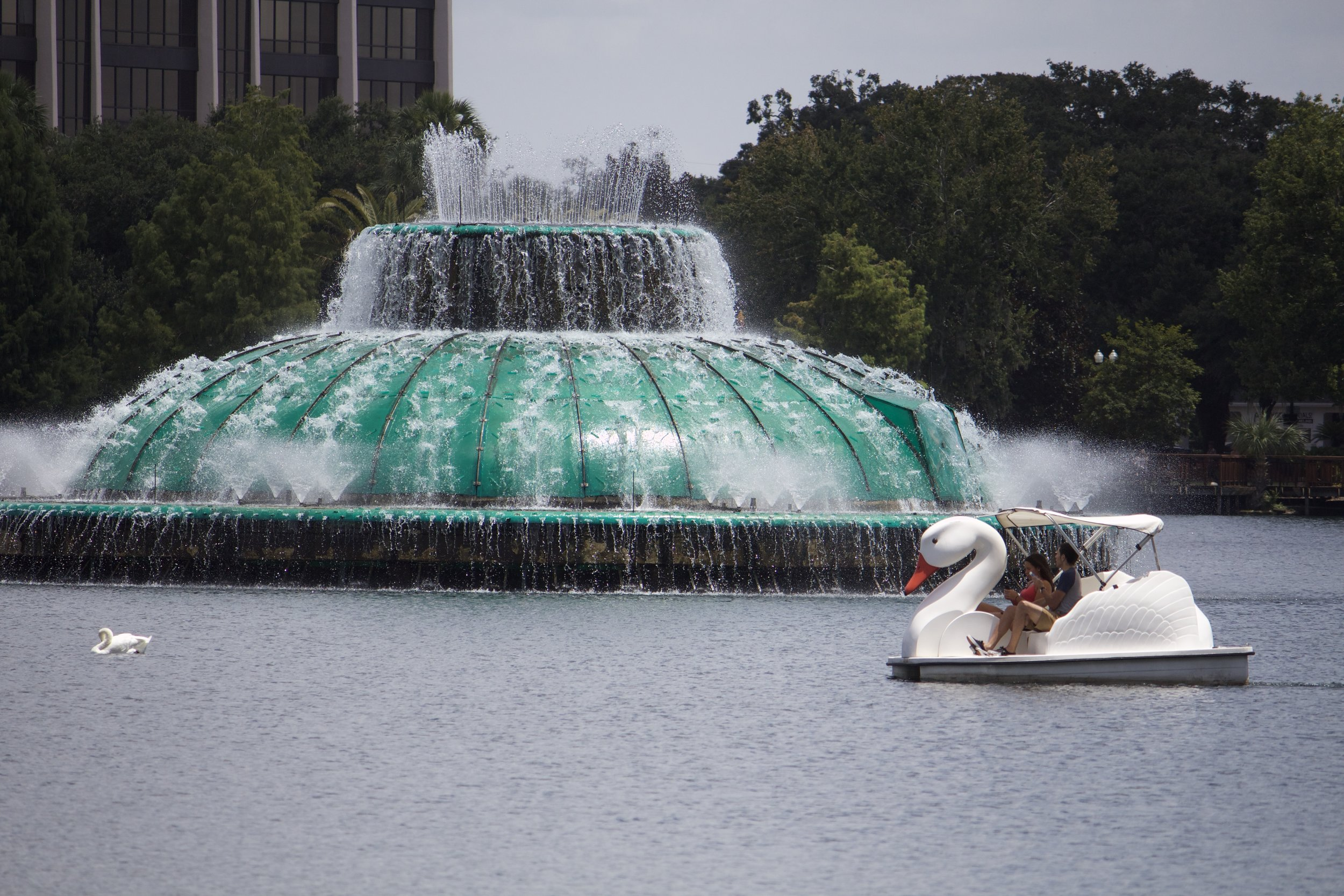 Swan Paddle Boat on Lake Eola