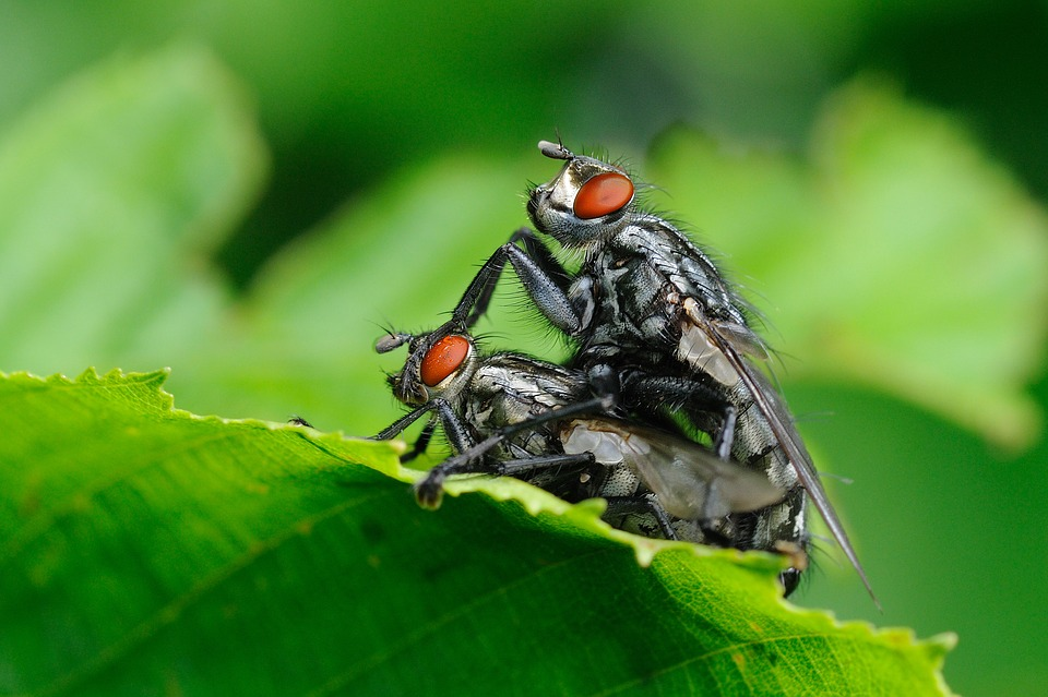 insect-1817942_960_720.jpg