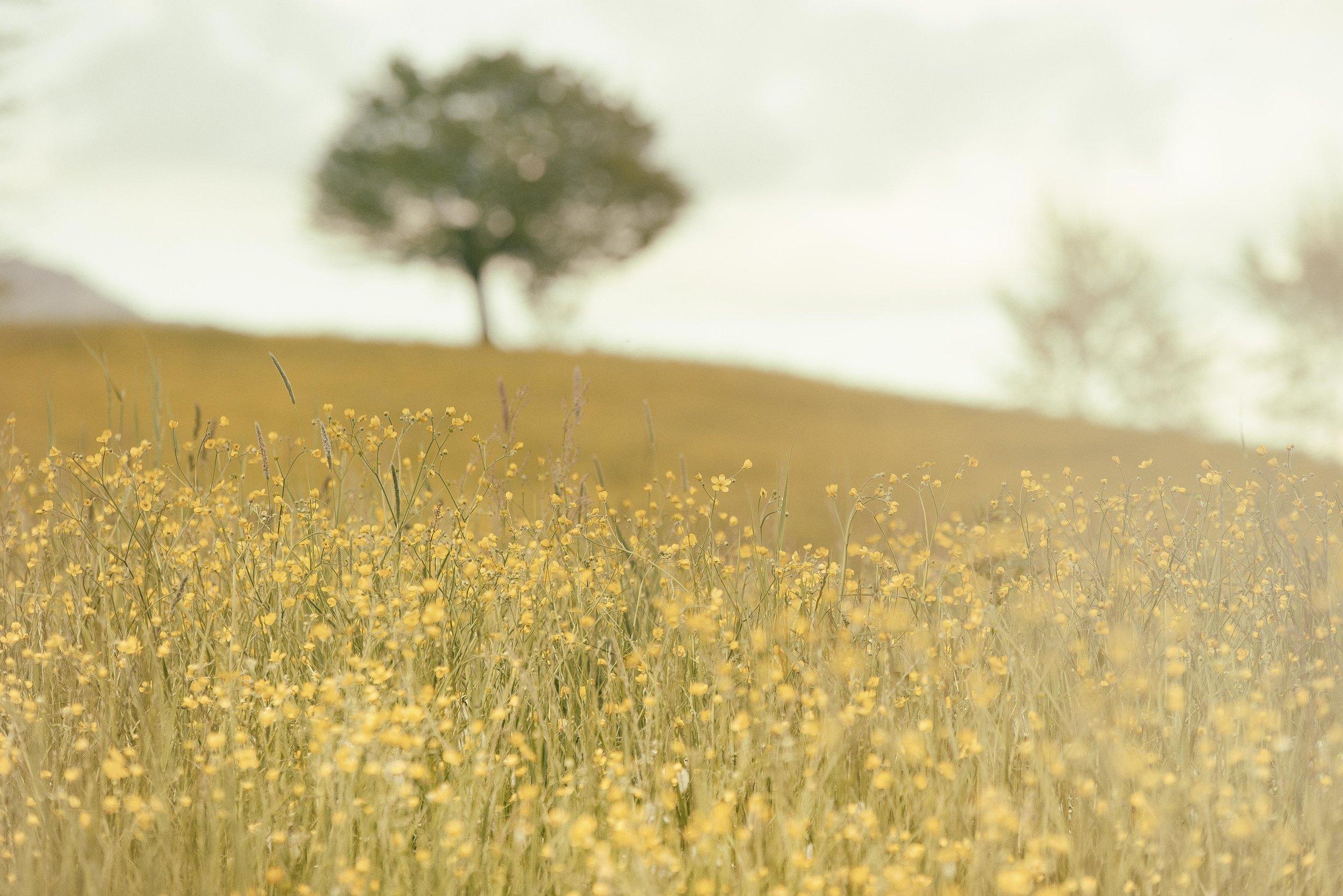 - BREEAM – ecology in depth