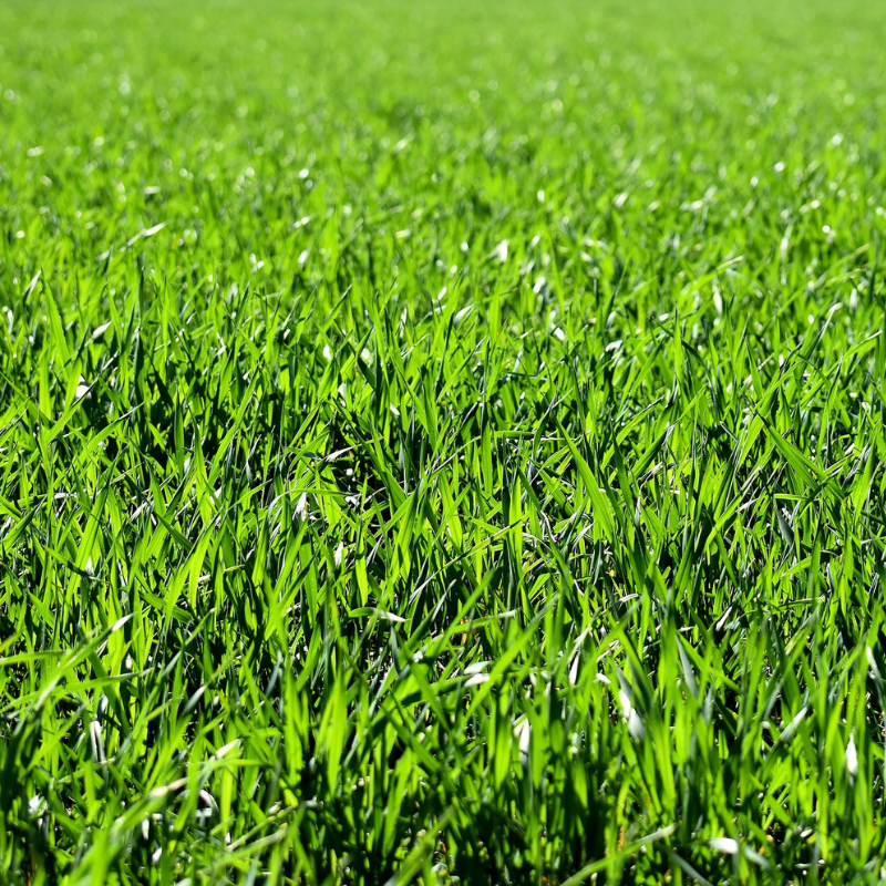 Grass -