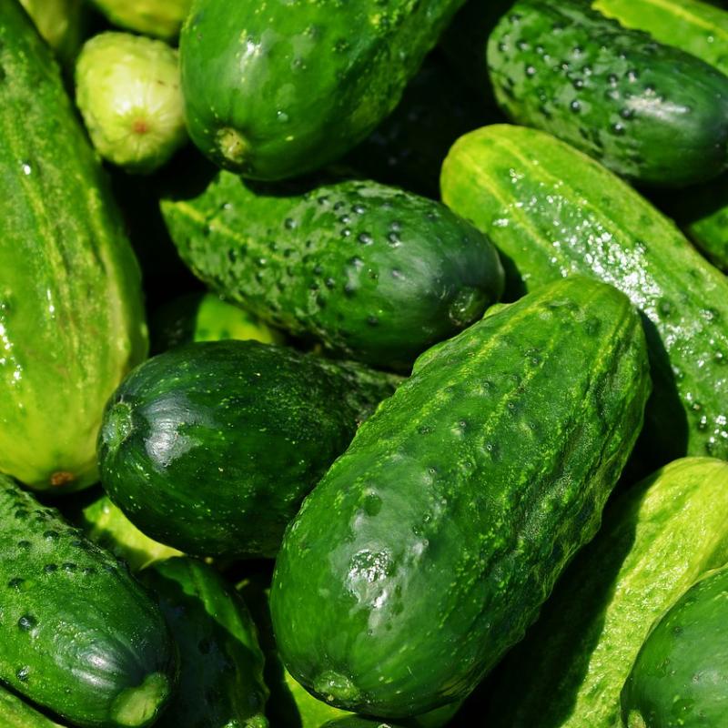 Cucumbers -