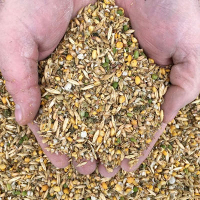 Corn Free Layer Feed