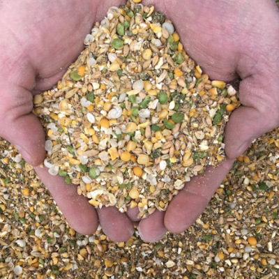 Duck Layer Feed
