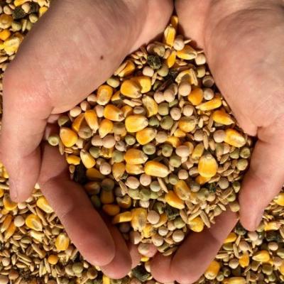Whole Grain Layer Feed