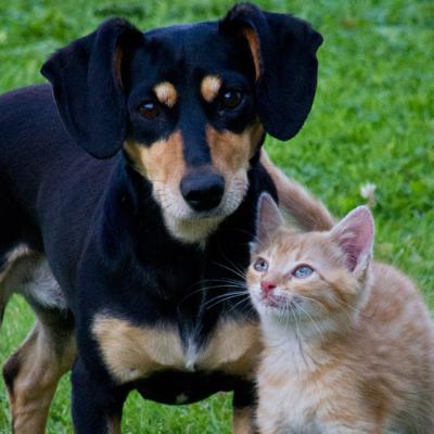 Pets -