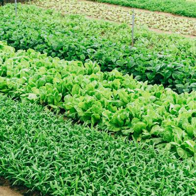 Fertilizers & Plant Foods -