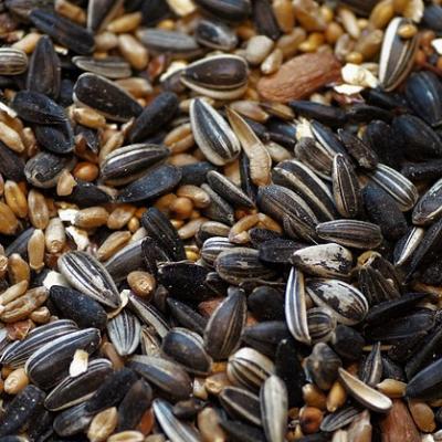 Seed & Feeds -