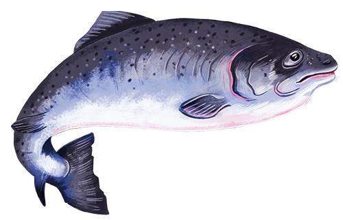Taste_salmon.png
