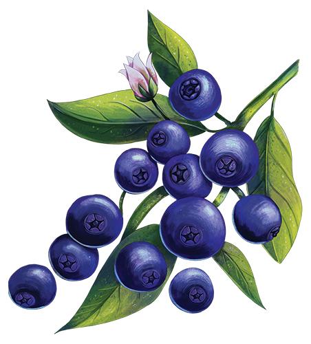 Taste_blueberry.png