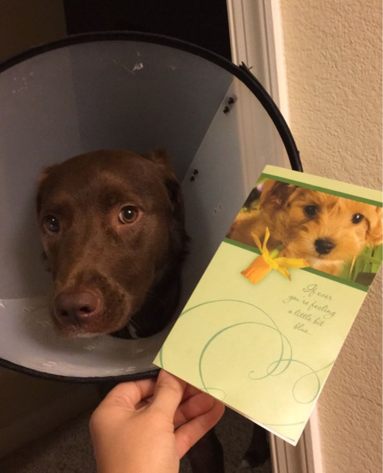 My Grandma sent Mako a get well soon Card! Sweetest Grandma award goes tooooo….. Makos Great Grandma for sure!