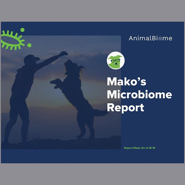 @animal.biome what an interesting test!! So much information about makos gut biome!! We are thrilled! And feeling good to be #average! Now to work on our goals and make her #gutbiome healthier!!
