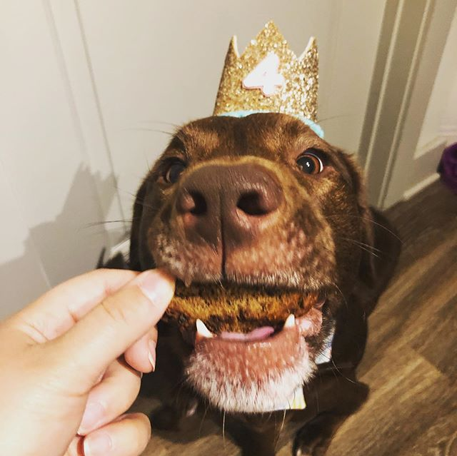 Birthday biscotti from @spotteddogbakery to start the day!! Crown by @busterspartyshop and bow by @chaseandchauncey #partyready #4yearsandcounting