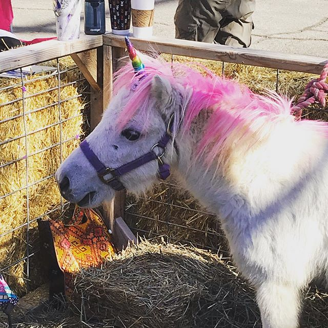 This #unicorn is valued at 1 billion dollars. Excellent investment opportunity.
