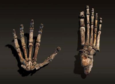 homo-naledi-hands.jpg