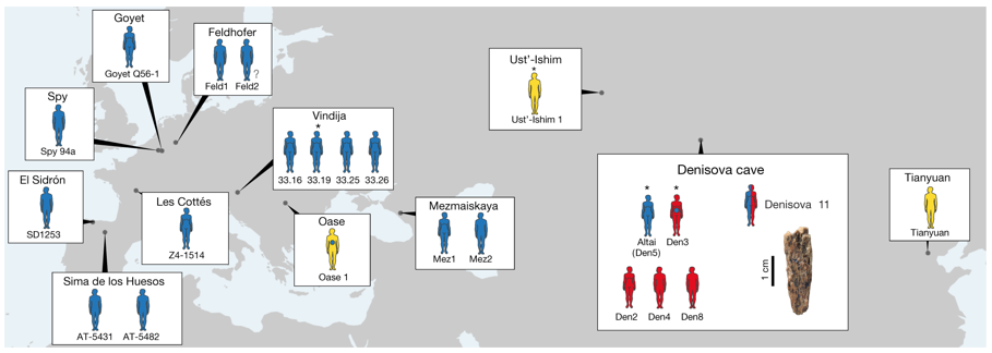 Fig. 1: Location of Neanderthals, Denisovans and ancient modern humans dated to approximately 40ka or earlier. Only individuals from whom sufficient nuclear DNA fragments have been recovered to enable their attribution to a hominin group are shown. Full or abbreviated names of specimens are shown near each individual. Blue, Neanderthals; red, Denisovans; yellow, ancient modern humans. Asterisks indicate that the genome was sequenced to high coverage; individuals with an unknown sex are marked with a question mark. Note that Oase 1 has recent Neanderthal ancestry (blue dot) that is higher than the amount seen in non-Africans. Denisova 3 has also been found to carry a small percentage of Neanderthal ancestry. Data were obtained from previous publications. From the Nature publication by Slon et al., 2018