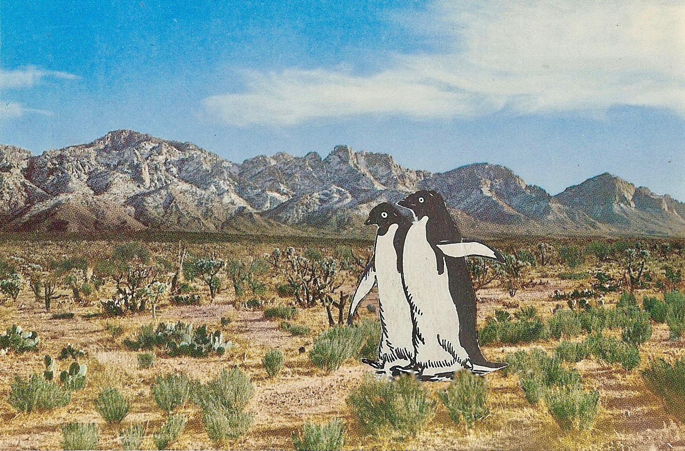 Global Warming   ,  Vintage Postcard Re-Imagined