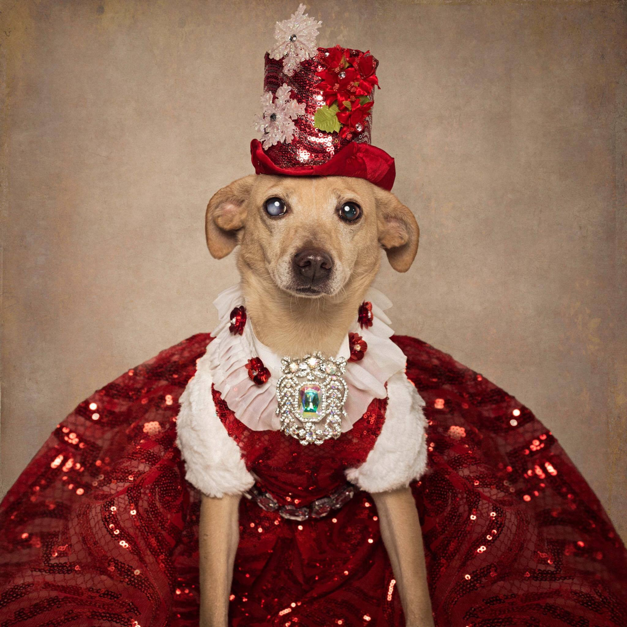 Anthony Rubio, Dog Fashion, Pet Fashion, Dog Model, Pet Couturier, Canine Couture, Gowns For Dogs, Clothing for dogs, 14_o.jpg