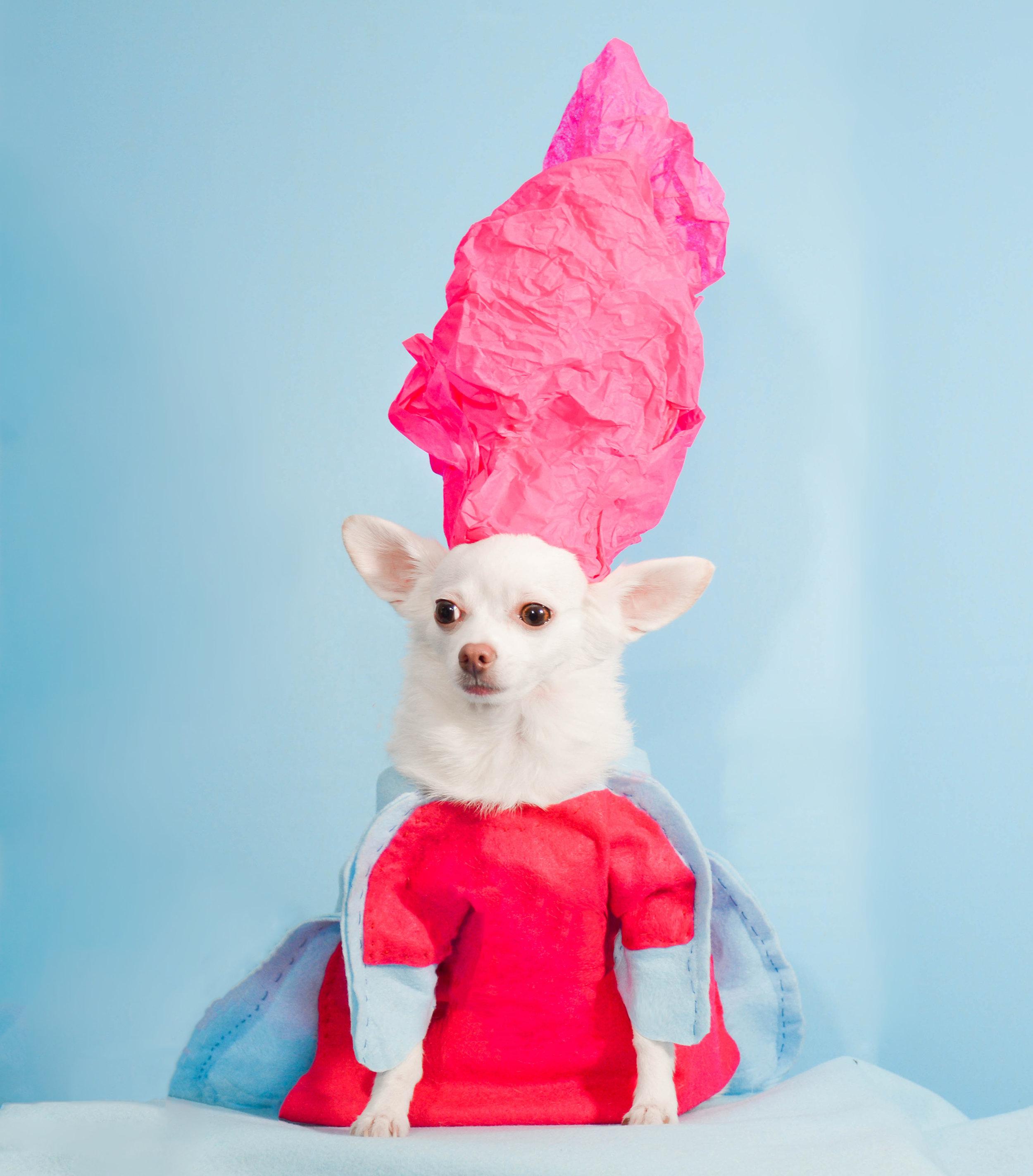 Anthony Rubio, 2017 Met Gala, Rei Kawakubo Inspiration, Dog Fashion, Comme Des Garcons,  DSC_3523 NEW 300.jpg