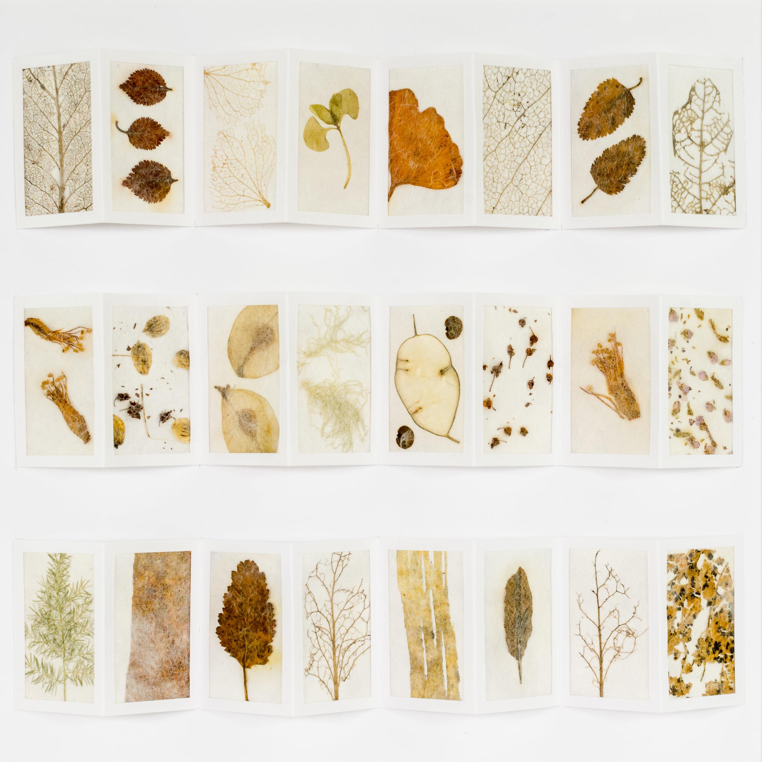 3 folded panel seeds leaves & bark.jpg