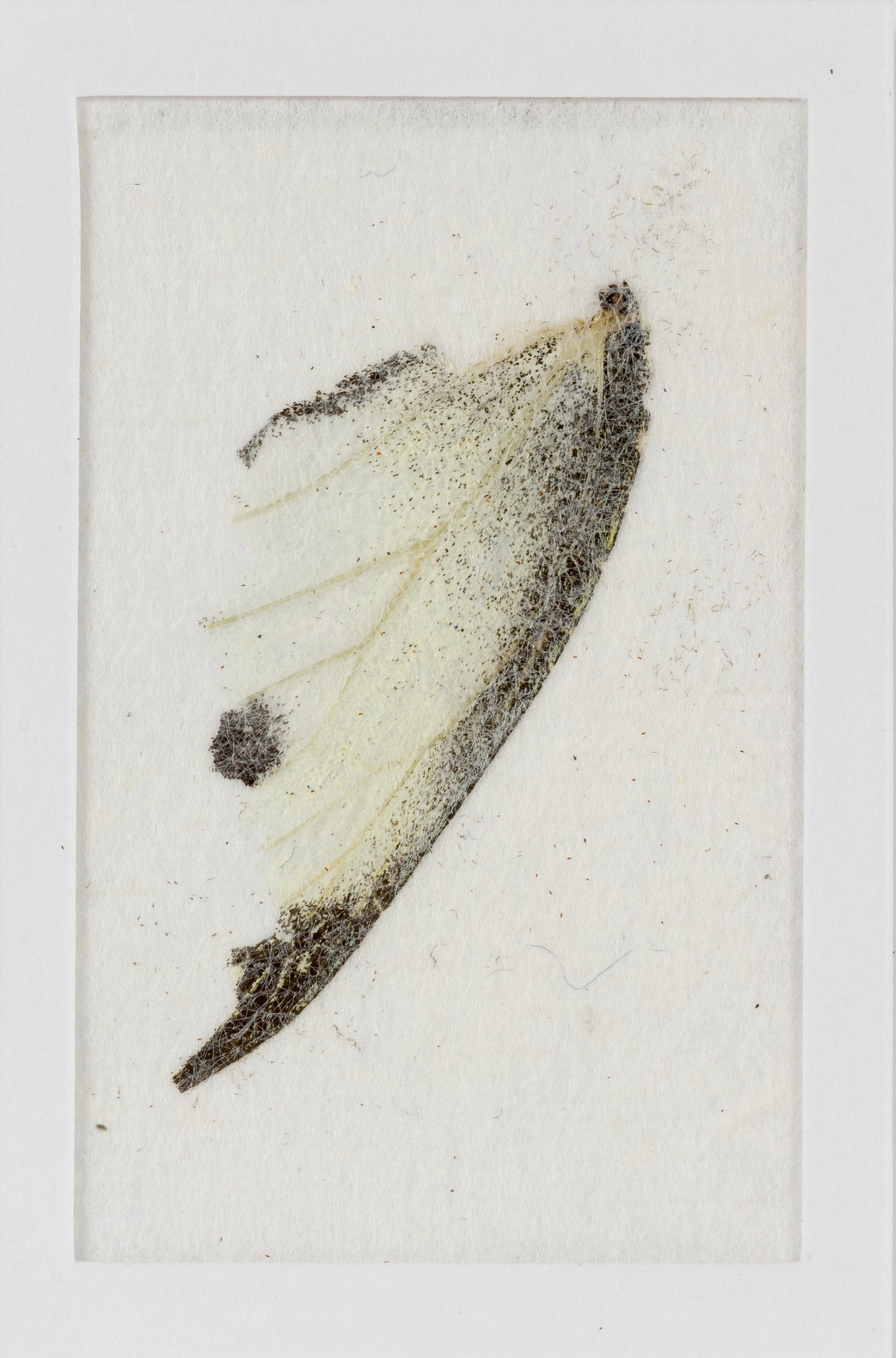 butterfly wing detail.jpg