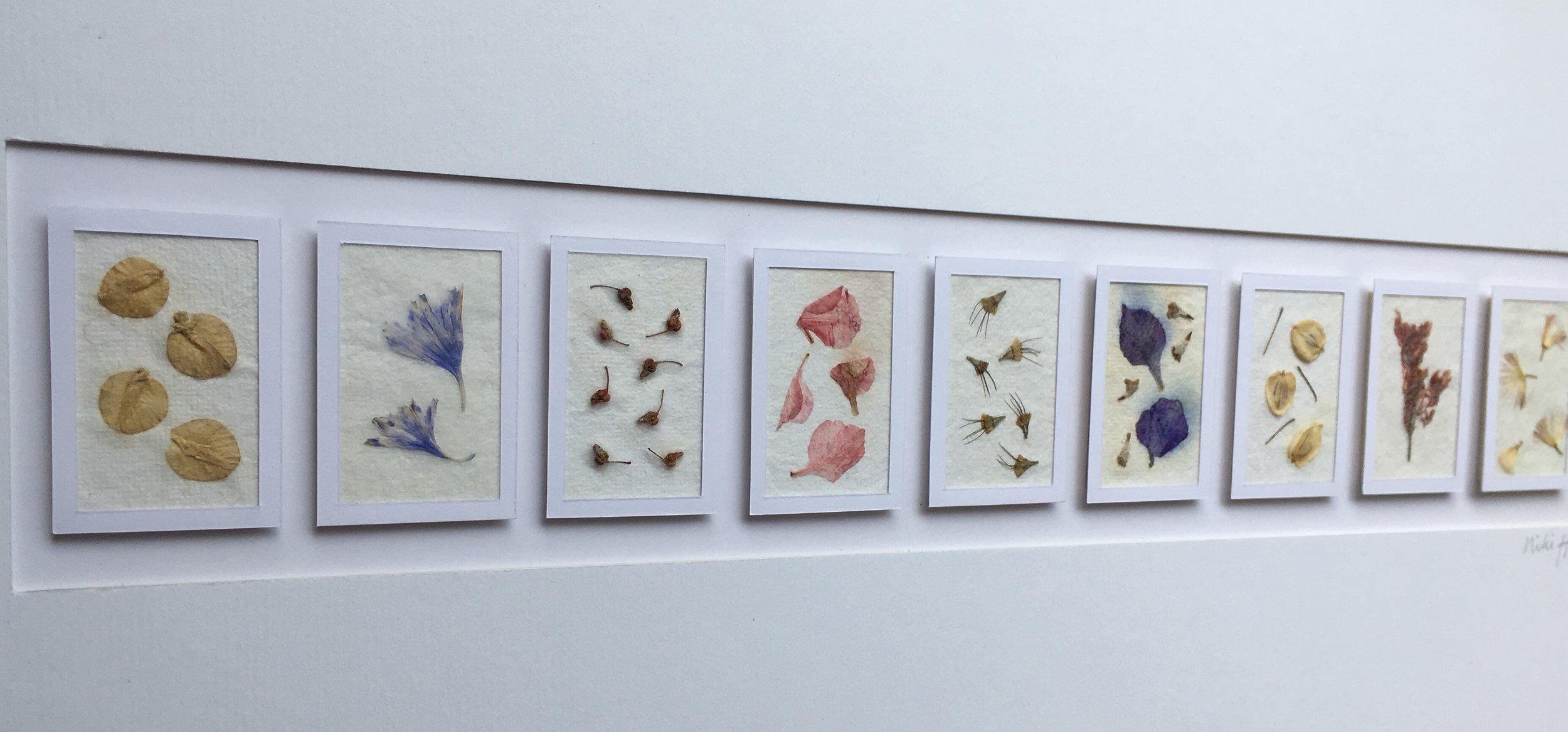petals & seeds picture.jpg