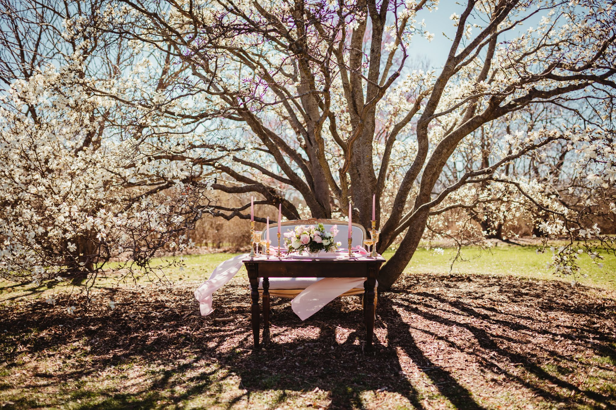 Blush and White Sweetheart Table Under a Magnolia Tree - Spring Wedding at the UW Madison Arboretum in Madison Wisconsin - Phoenix & Rose Photography