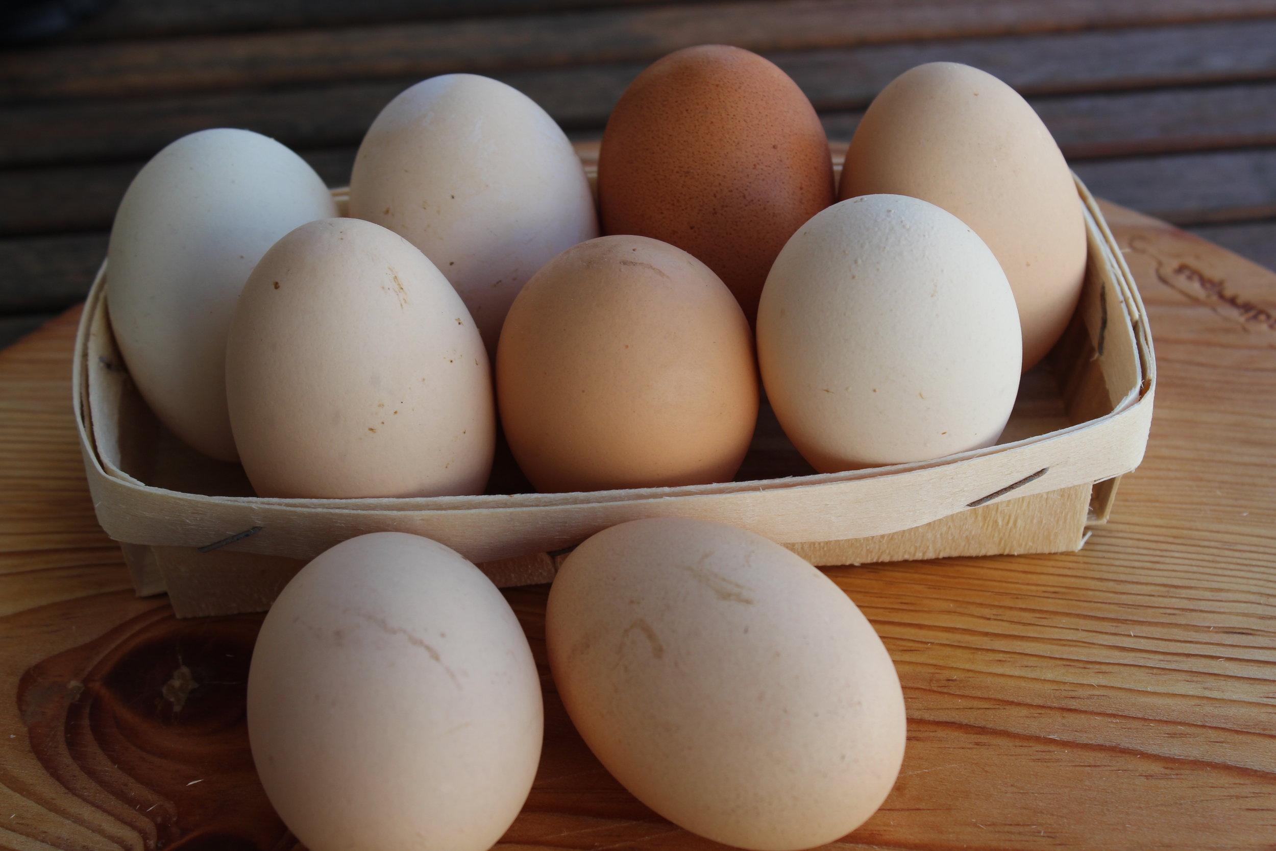 lulas guisadas com ovos foto.JPG