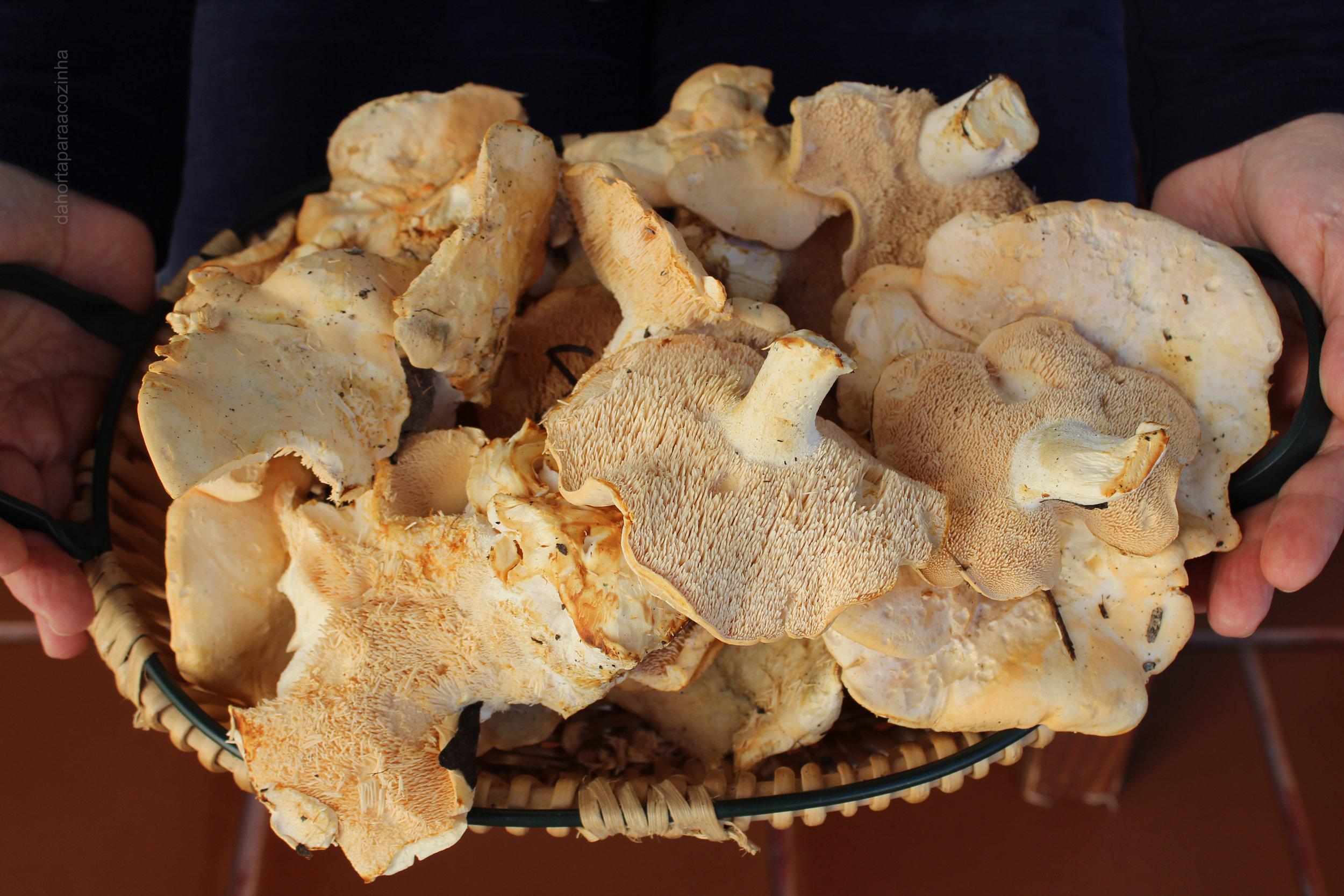 risotto Cogumelos Pied de Mouton foto.JPG