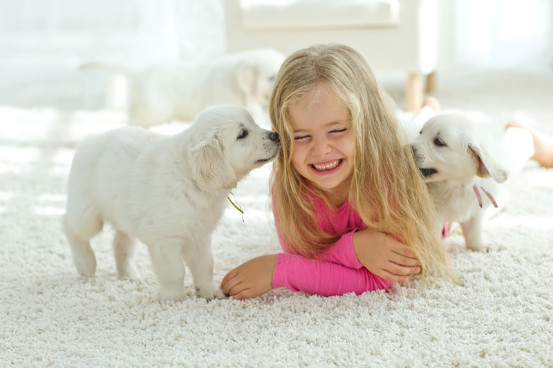 carpet-girl-with-puppies.jpg