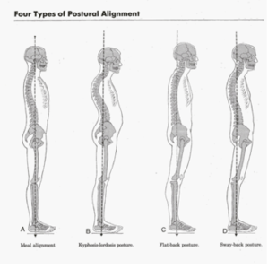 The ideal alignment of the spine lengthens its natural curves.