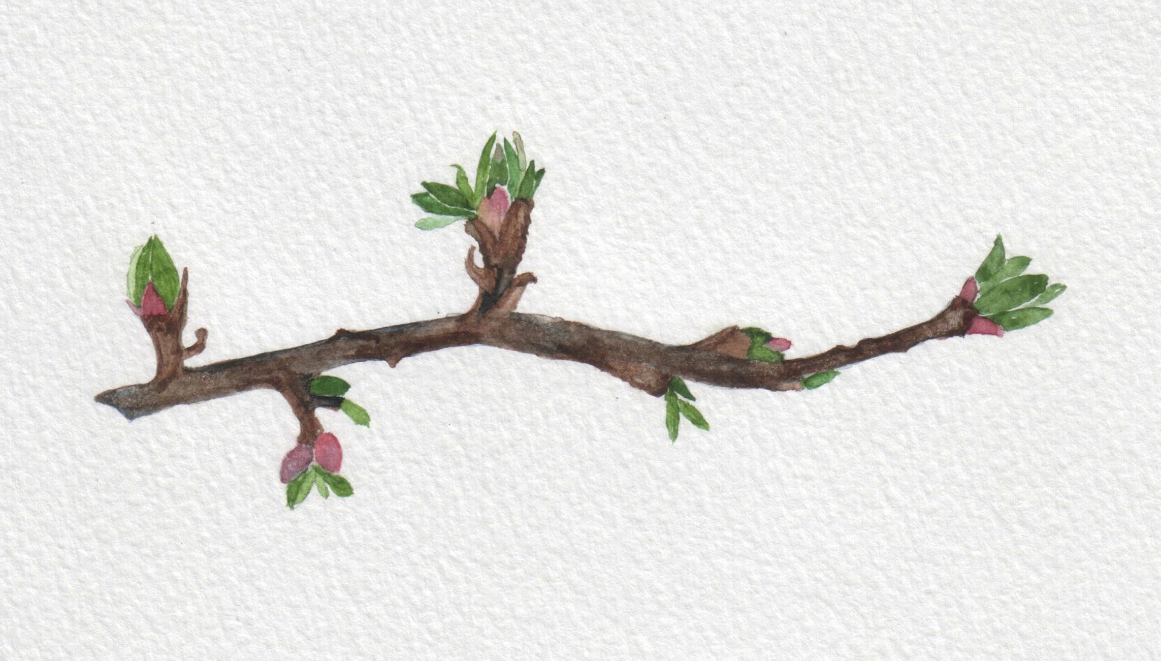 cover branch.jpg