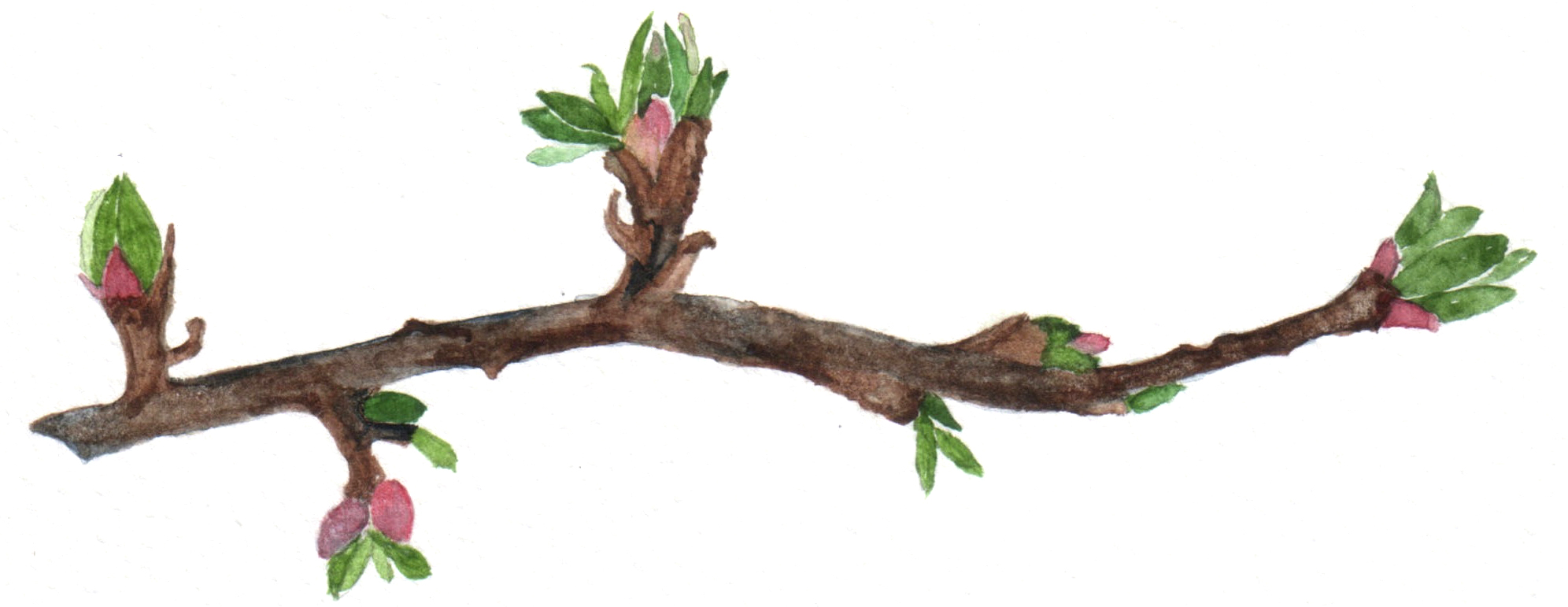 - Budding Leaf Shiatsu