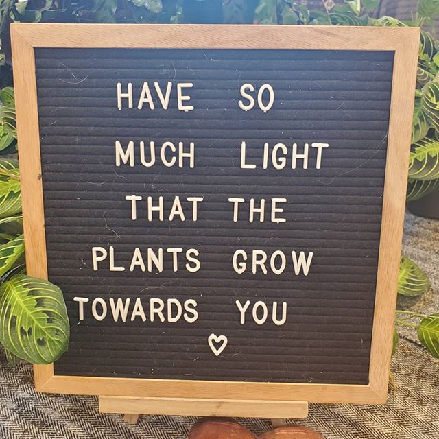 I 💚 plants And light ☀️ And those that *feel* like light✨ . . #throwbackthursday to the beautiful #marketformakers in KCMO @studiodanmeiners . . #chiropractic #activereleasetechnique #myofascialrelease #webstertechnique #acupuncture #coldlaser #innatehealing #holistichealth #crossroadskc #downtownkc #hygge #healing #botoxinjury