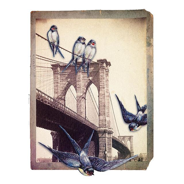 big bklyn birds :) #collage #digitalcollage #nypl #graphicsfairy #graphicdesign #illustration #design #bird #birds #worldslargestbirds #swallow #getbirded #brooklyn #nyc #bk #brooklynbridge #vintage #vintagecollage #vintagephotography #vintagenyc #vintageillustration #redbubble #redbubbleartist #hashtags4birds #hashtags4bridges #hashtags4brooklyn #hashtagoverkill2k18 #yeehaw #thanksforstoppingby  find me on redbubble @ lilystammdesign 🌚🌝