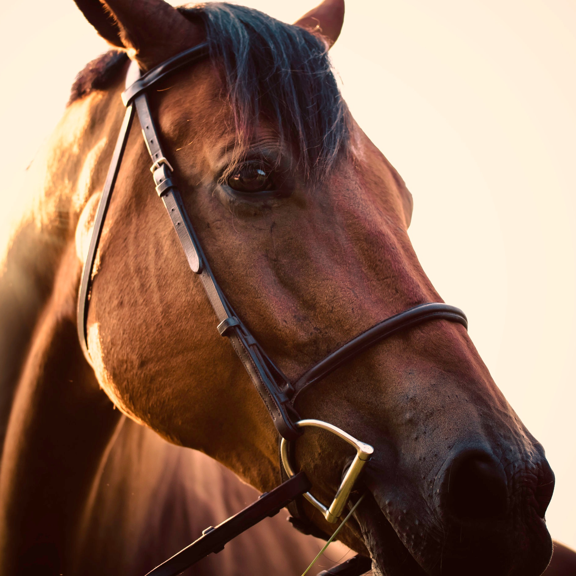 Horses and Cannabis -