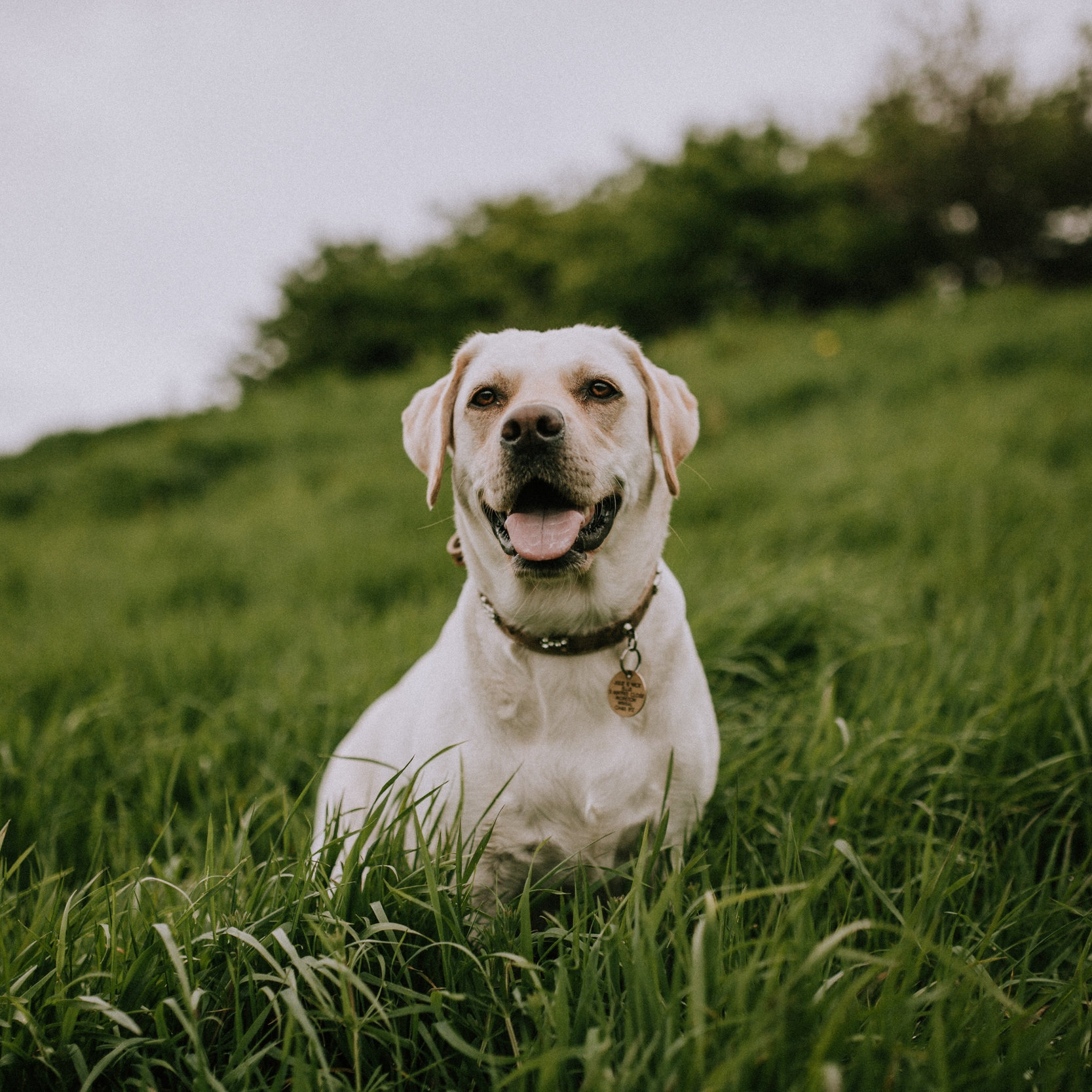 Pets and Cannabis -