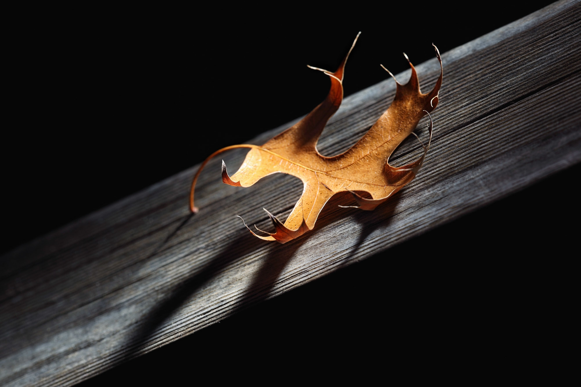 2._Autumn_Strobist_-_George_Suresh.jpg