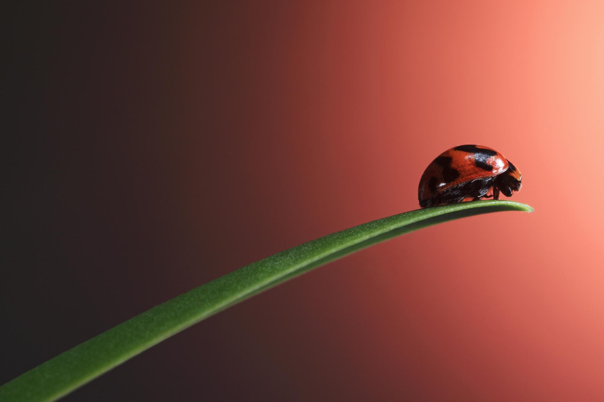 The Bug.jpg