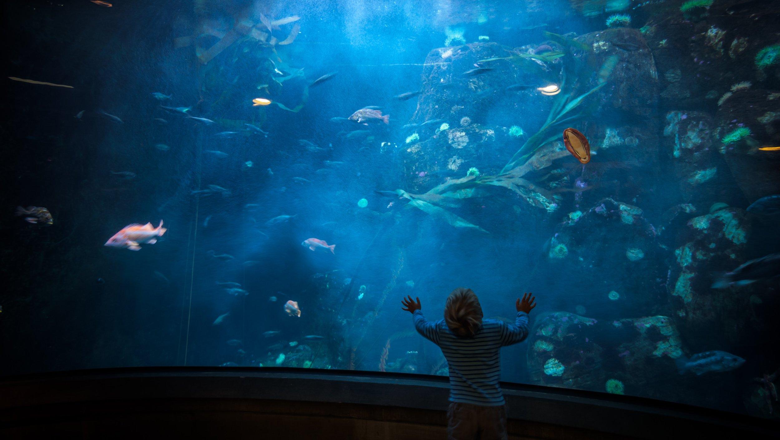 Verdenshavene fylles med plast og flere arter forsvinner i skremmende raskt tempo. Foto:  https://unsplash.com/@vanveenjf